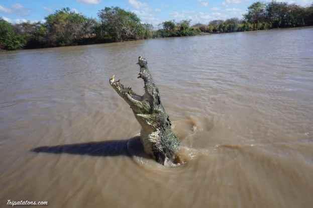 jumping-crocodiles-10