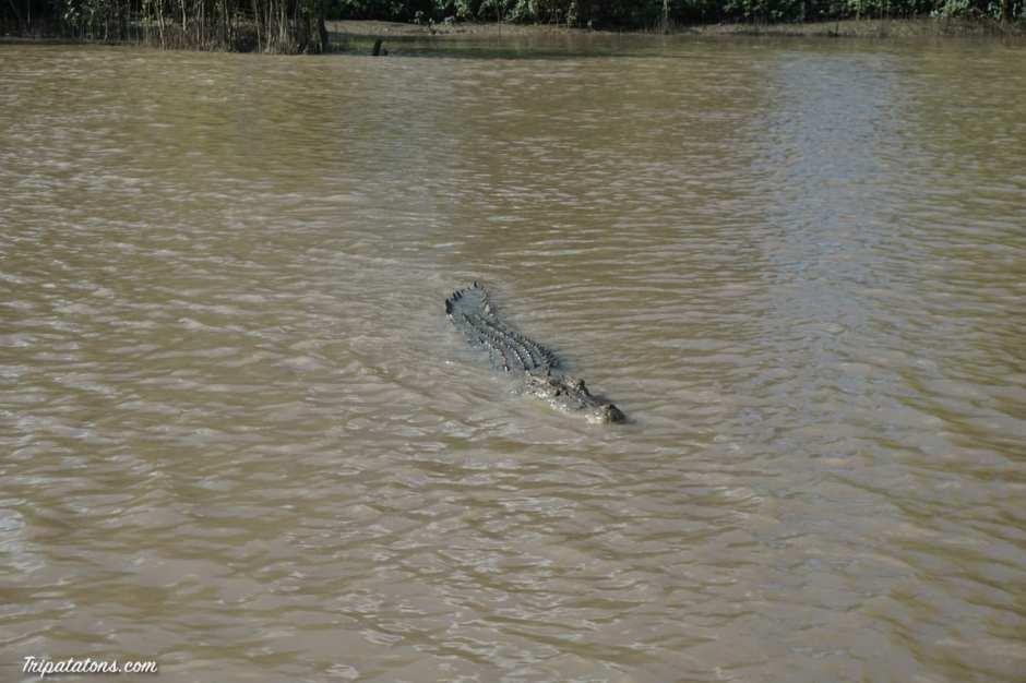 jumping-crocodiles-3