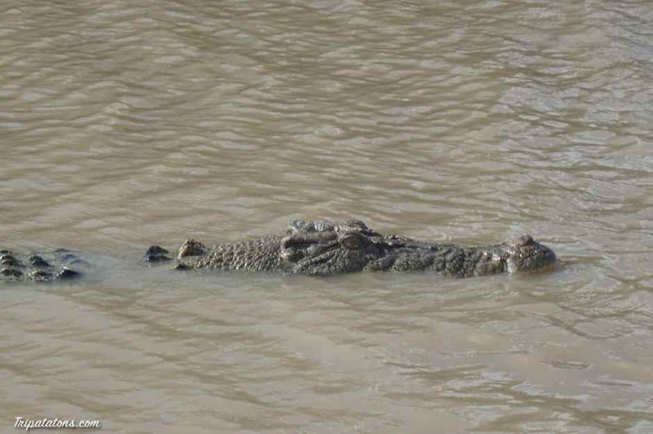jumping-crocodiles-5