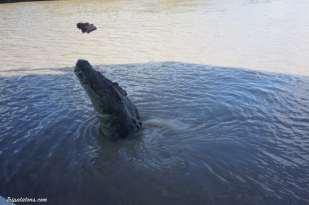 jumping-crocodiles-8