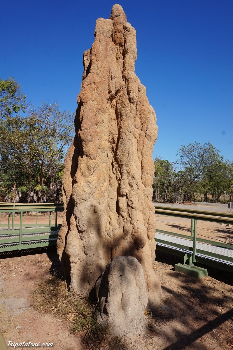 magnetic-termite-mounds-2