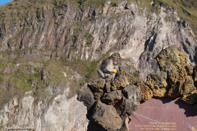 mount-batur-summit-monkey-1