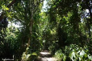 végétation dense sur le Myall Beach Track