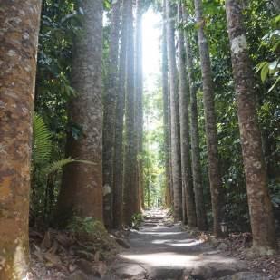 kauri avenue, ces arbres sont protégés maintenant