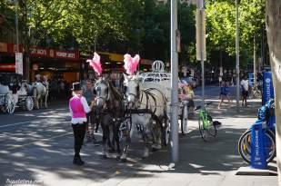 Les pauvres chevaux dans la ville