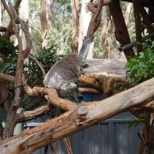koala hospital (1)