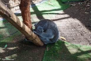 koala hospital (2)