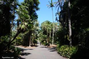 royal botanic gardens (2)