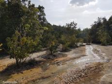 esmerald-pool-jungle-2