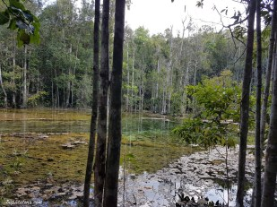 esmerald-pool-jungle-5