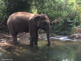 river-elephants-2