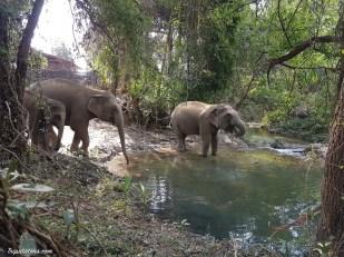 river-elephants-4