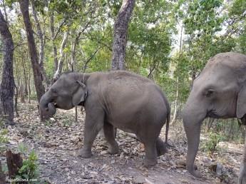 walk-elephants-6