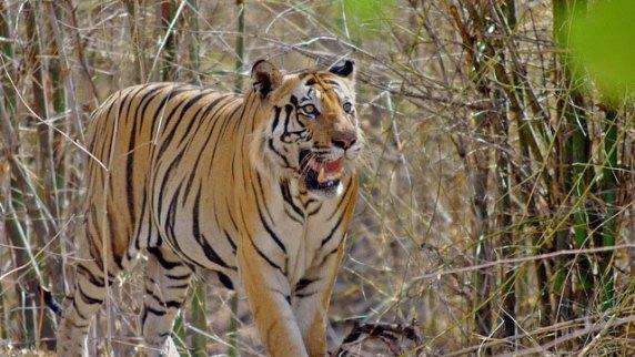 Image result for Bandhavgarh National Park images