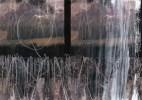 """""""From bones we grew trees"""" by Jean Tripier"""