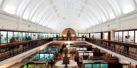 horniman museum london