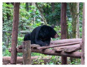 Bear Rescue Centre Kuang Si Waterfall, Luand Prabang, Laos