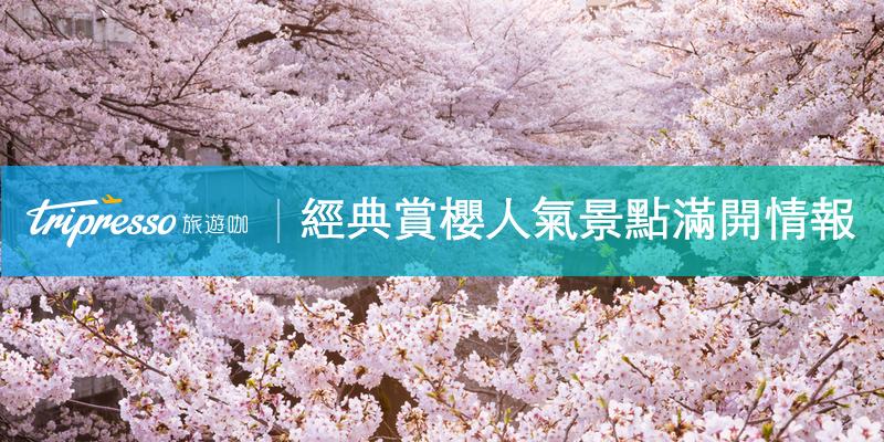 春天必追粉色浪漫!經典日本賞櫻人氣景點滿開情報