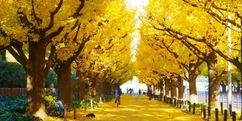 2019日本東京|被美哭!明治神宮 新宿御苑等市區最佳賞銀杏景點TOP5