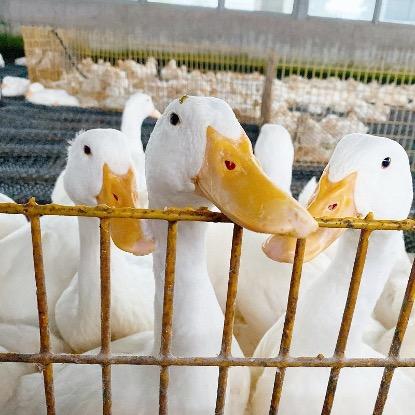 宜蘭動物農場