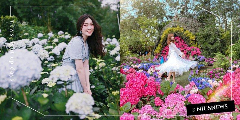 不能出門那就線上賞花!「竹子湖繡球花田」農友每日分享當日花況,還能外送把花訂回家