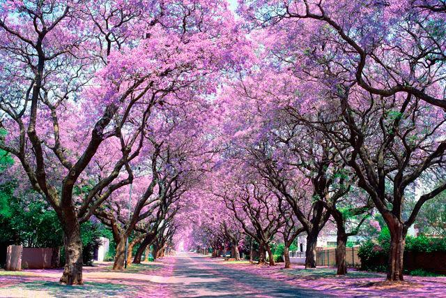 Church Street, Pretoria, South Africa