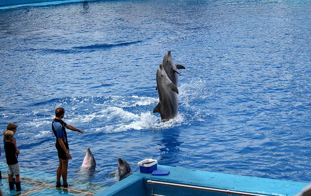 oceanografic-delphins