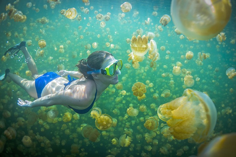 Palau's Jellyfish Lake