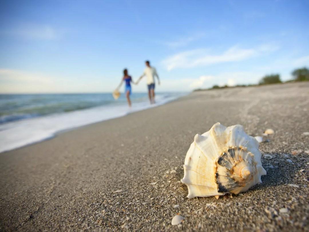 Sanibel seashell