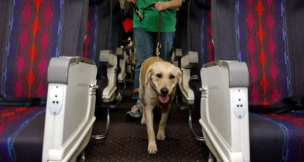 How to Take Your Service Animal Through Airport Security