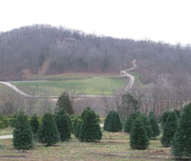 Get Your Christmas Tree At These St Louis Farms And Sales