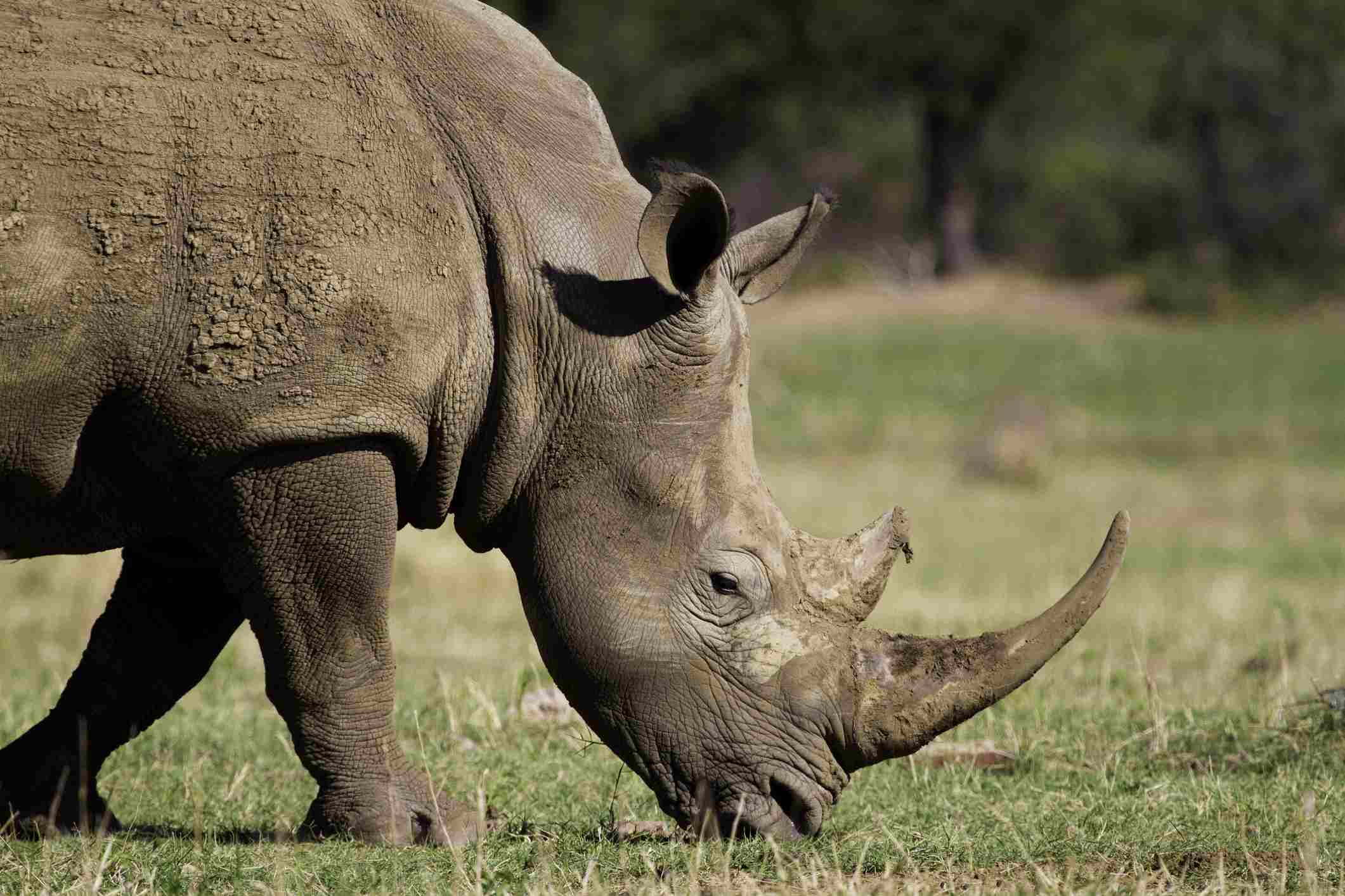 Africa S Top 10 Safari Animals And Where To See Them