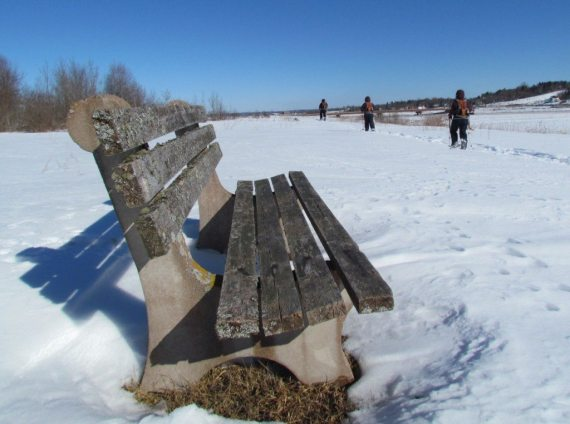 Lichen covered benches along the trails are great to stop and have a picnic when out for a warm winter day!