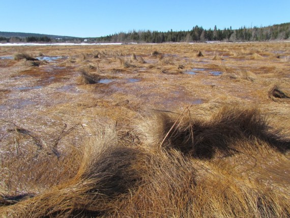 Creeping along the sandy beach, a spit extending out is surrounded by low swirling grasses. The brackish area is marsh and it's incredible to see these hearty grasses surviving along this shore.