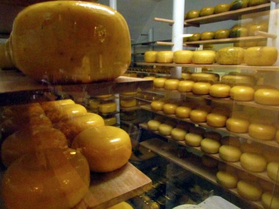 Rows and rows of delicious Gouda Cheese at the Dutchmans!