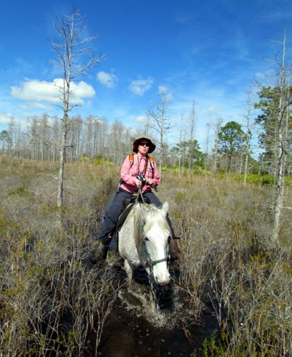 DD maneuvers through the Muskeg at the Forever Florida horse back ride. I felt bad for the horses for having to carry us through these swampy conditions and wish I had a carrot to give them for a thank you!