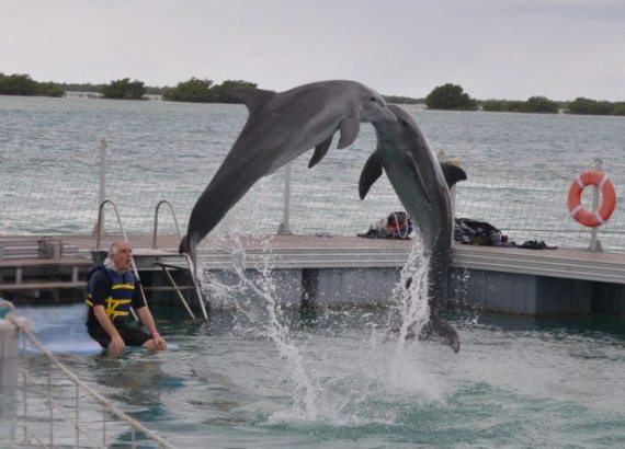 Being so close to the graceful leaping dolphins was a highlight of the visit to the Delfinario at Cayo Guillermo in Cuba.