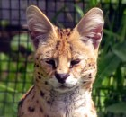 New Animals at the Magnetic Hill Zoo