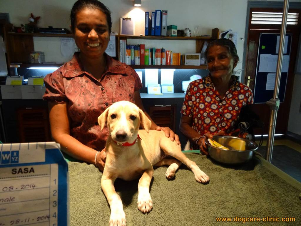 Dog Care Clinic - puppy being adopted