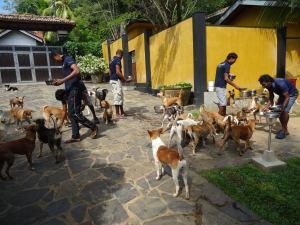 Feeding hungry dogs in Sri Lanka