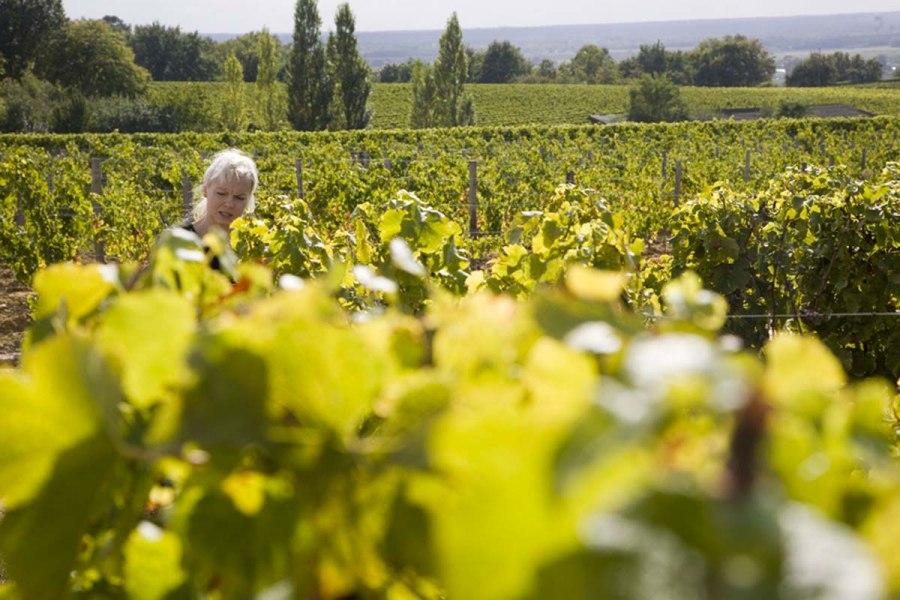 Viinitila Bordeaux'ssa. © tripsteri.fi / Anuliina Savolainen