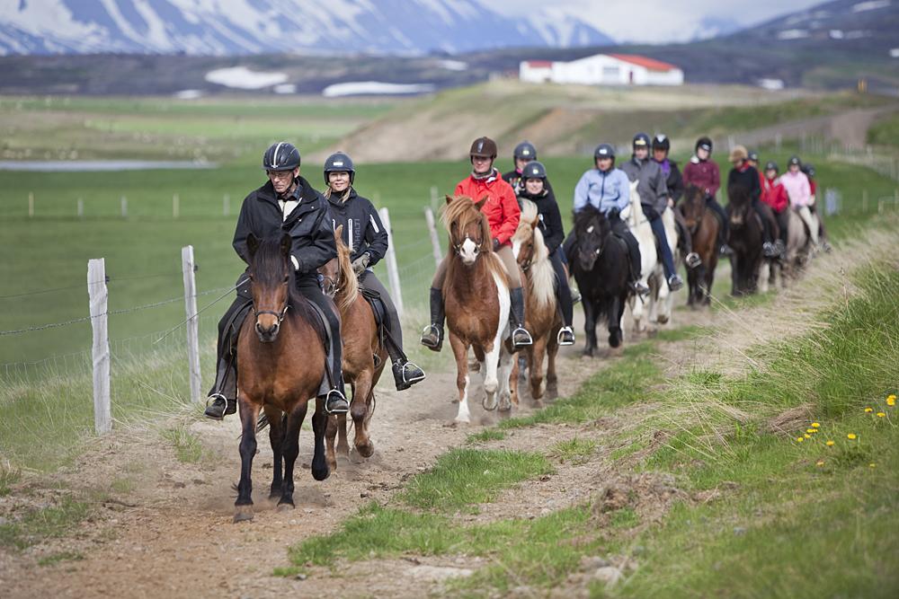 Hopotihoi. Lähde päiväksi tölttäämään islanninhevosilla! Kuva: Björgvin Hilmarsson