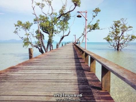 สะพานสู่ฝัน เดอะ ซินนามอน อาร์ต รีสอร์ท แอนด์ สปา เกาะหมาก