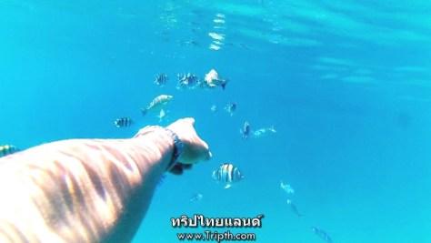 ไปตรงไหนก็เจอแต่ปลา ฮ่าๆ