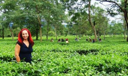 Tea travels with Dharlene Fahl