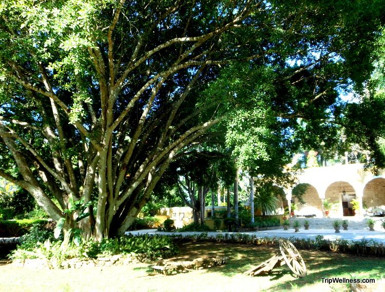 Hacienda Chichen Itza Guardian Tree, trip wellness