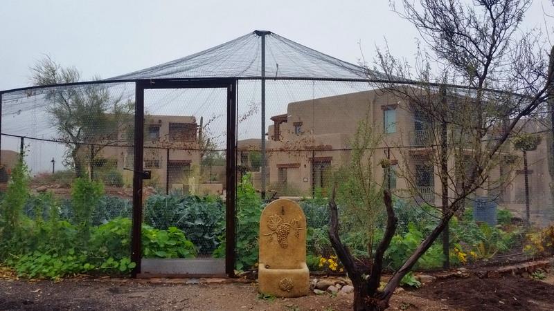 The garden at Hacienda del Sol