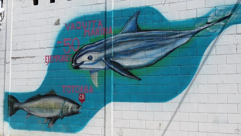 Vaquita mural in Puerto Penasco