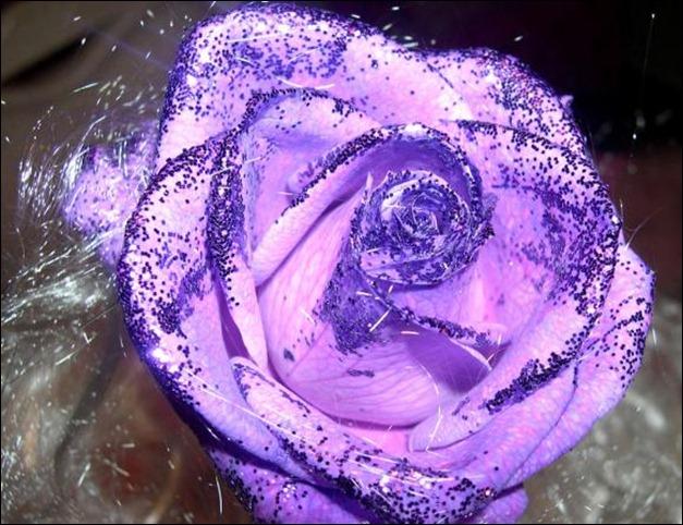 Rose_3080