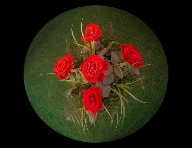beautiful_rose1